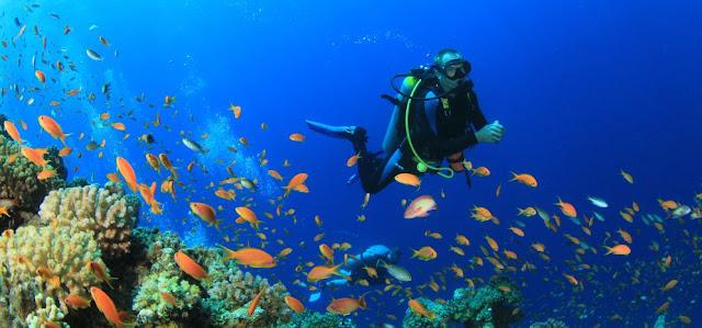 Galapagos Diving FAQs