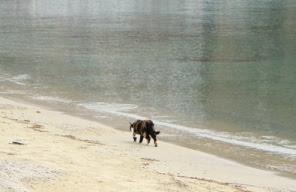 grecki kot na spaceruje po plaży tuż przy linii brzgowej greckiego morza