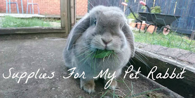 Supplies For My Pet Rabbit