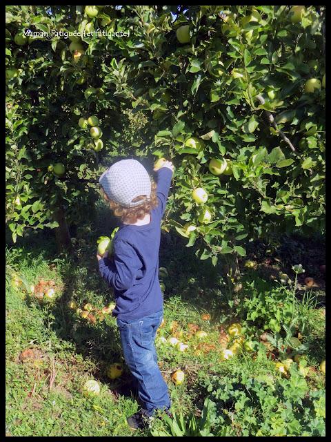 cueillette pomme domaine astro vidauban