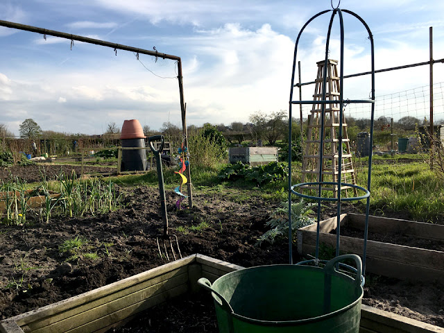 Allotment in early spring
