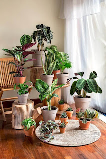 How to Choose a Good Dining Room Plant