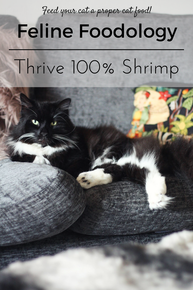 Feline Foodology: Real shrimp treats by Thrive