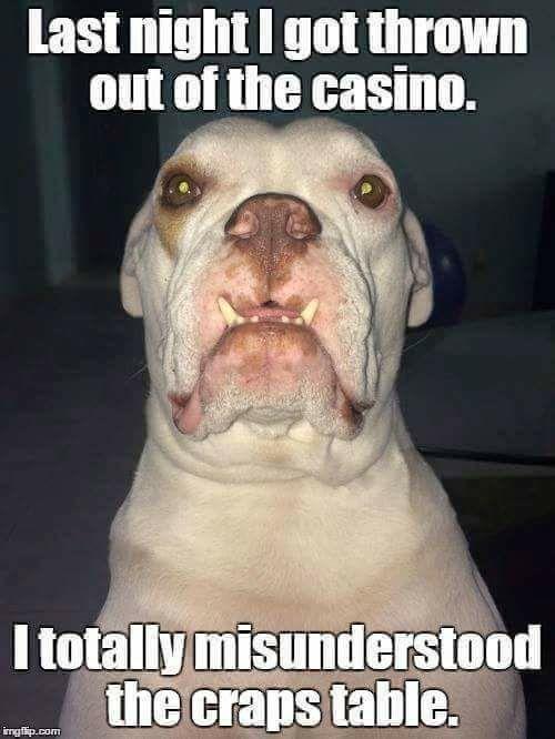 Dog Craps In House