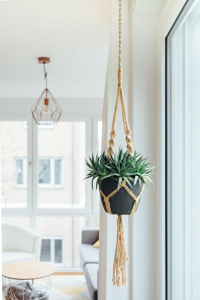 10 trucos para decorar tu hogar en invierno por menos de 100€, decorar con plantas colgantes
