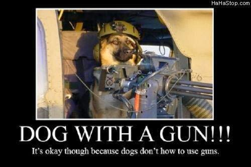 funny dog pics with guns - photo #2