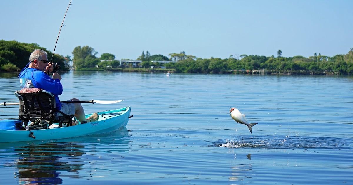 Southern kayak kronicles december saw improved fishing in for Tides 4 fishing sarasota