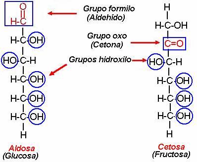 carbohidratos del grupo funcional hidroxilo y diabetes