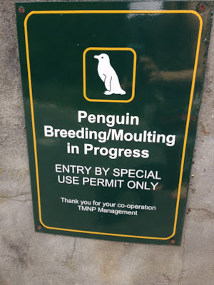 penguin breeding/moulting in progress