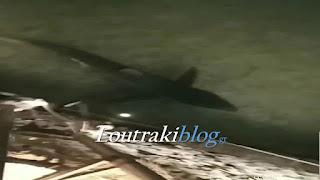 Εμφανίστηκε Καρχαρίας 2 μέτρων στην παραλία Λουτρακίου (βίντεο)
