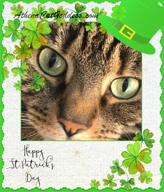 St Patrick's Day tabby cat art