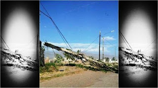 Esta mañana las fuertes ráfagas de viento provocaron la caída de algunos árboles. Además, en Jáchal se suspendieron las clases en algunos establecimientos, en tanto que en el resto de la provincia las actividades son normales.