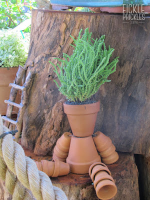 Succulent Terracotta pot man - crassula muscosa