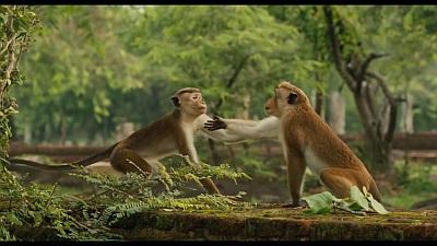 monkey deutsch