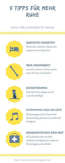 Infografik Tipps für mehr Ruhe bei aufgeregten Hunden