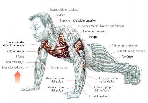 Flexiones de brazos en el suelo, forma de realizarlas. | Rane Forti