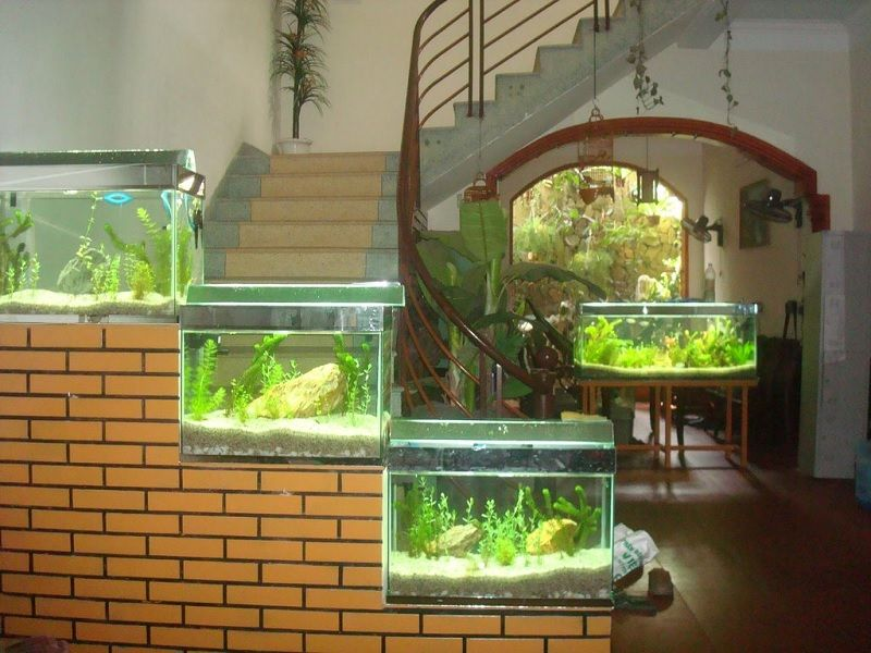 Image Best Betta Fish Tank