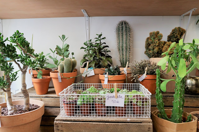 Cactus / Green addict / Blog Atelier rue verte /