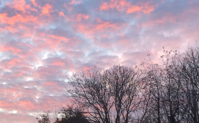bare trees sitting against a background of pink clouds at sunset.