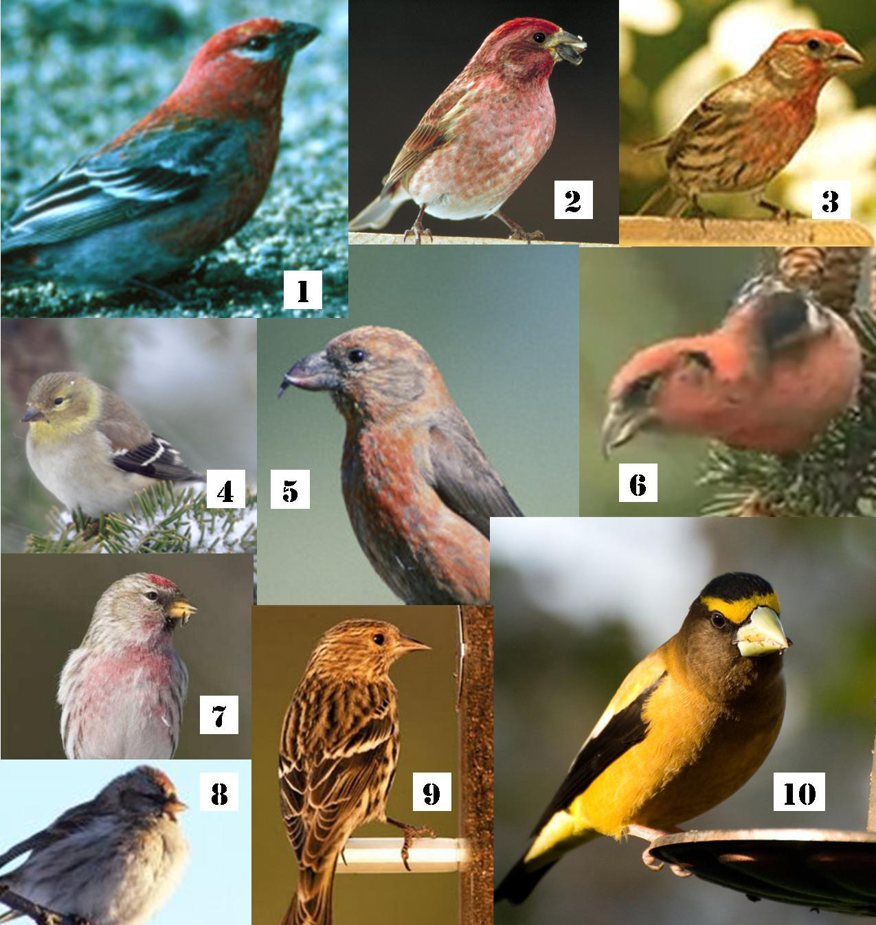 Wild Birds Unlimited Common Michigan Birds I Can See At: #FeedtheBirds 1: 2012 Winter Finch Forecast: Good News For