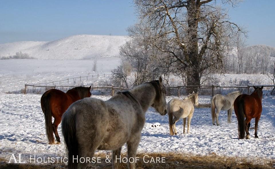 chivering beim pferd