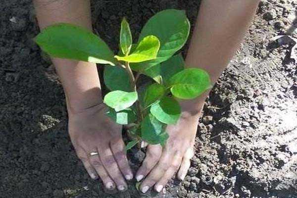Short essay on Tree Plantation ~ Essay and Letter Writing