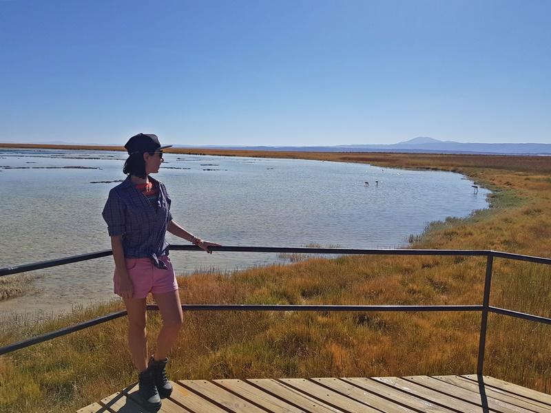 O que fazer no Atacama: Laguna Cejar e Tebenquiche