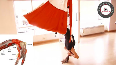 aerial yoga, aerial yoga teacher training, aeroyoga, air yoga, ayurveda, fly, flying, flyingyoga, health, teacher training, YOGA, seminars, classes, online teacher training