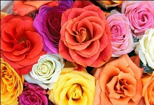 http://2.bp.blogspot.com/-SW-dVEmULpI/T491qOMKp5I/AAAAAAAACUo/OvBgtaxO2s8/s1600/love_blooms_roses_thumb.jpg