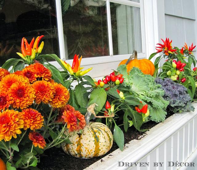 Fall Window Box: My Fall Window Boxes