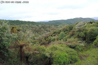 Bosque con presencia de helechos arbóreos