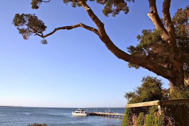 Seal Watching Cruise, Phillip Island
