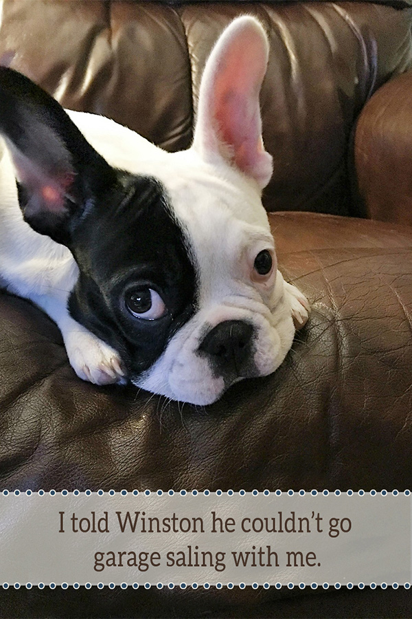 "French Bulldog puppy says, ""Pretty Please take me garage sale shopping?"""