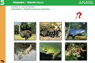 http://www.ceipjuanherreraalcausa.es/Recursosdidacticos/QUINTO/datos/02_Cmedio/datos/05rdi/ud02/01.htm