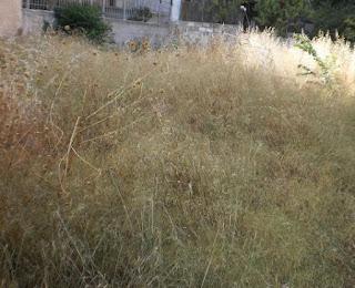 Αποτέλεσμα εικόνας για kainourgiopress οικόπεδα