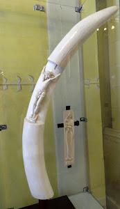 Dary z Afryki (kość słoniowa)