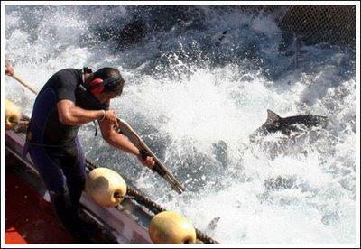 Gila Kejam Menembak Ikan Sebelum Diangkat Ke Daratan Sah Dan Tak