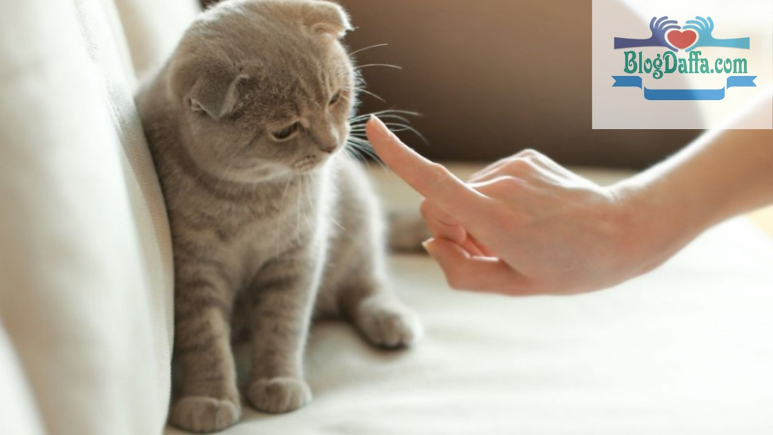Cara melatih kucing agar mengetahui kesalahan