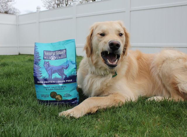 Natural Balance Wild Pursuit Dog Food