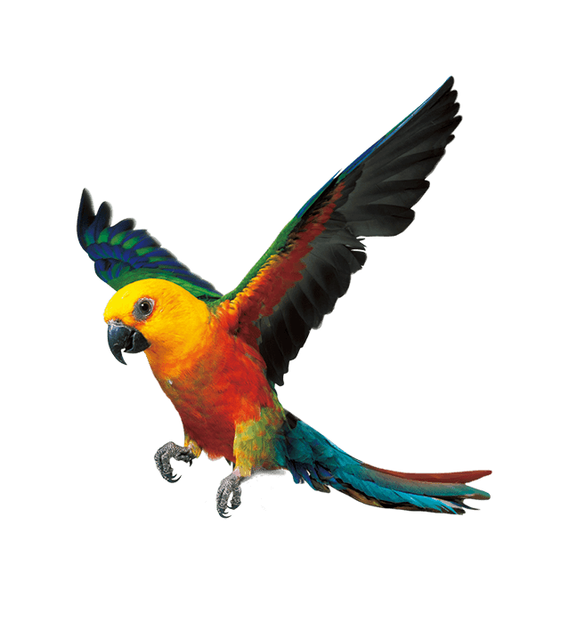 PNG Sector: Parrot png hd - Parrot PNG image and Clipart