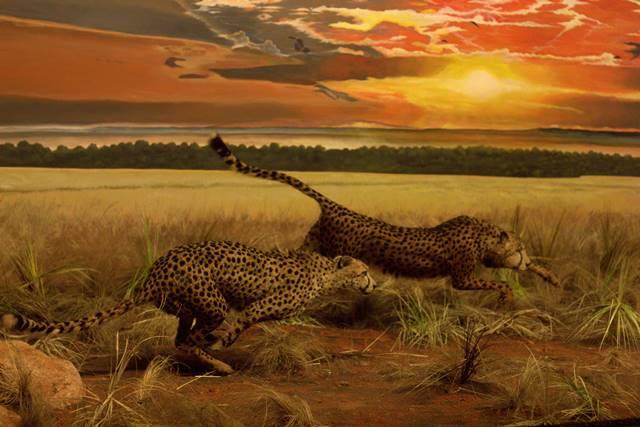 Diorama Cheetah Berburu Rusa - Museum Satwa, Jatim Park #1