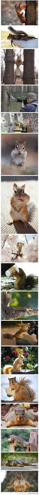 Varias imagenes simpaticas de ardillas