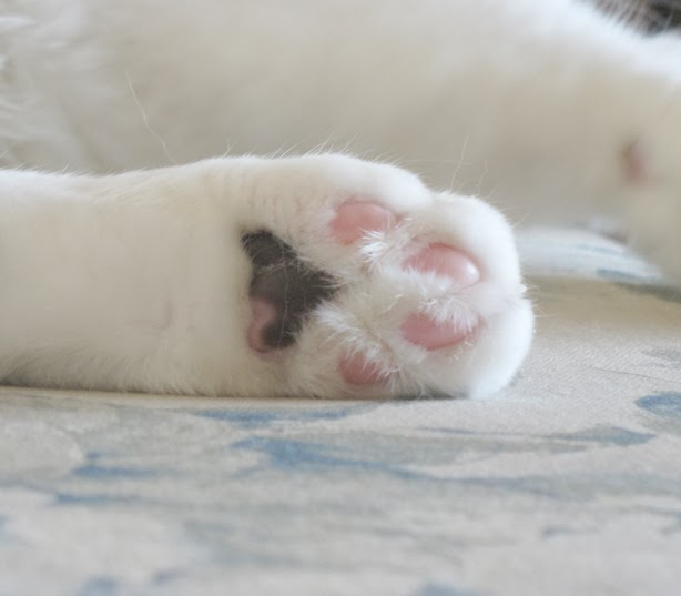I Have Three Cats Cats Paws