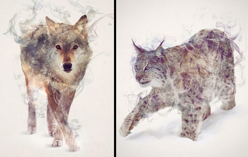 00-Daniel-Taylor-Ghostly-Animals-in-Manipulated-Photographs-www-designstack-co