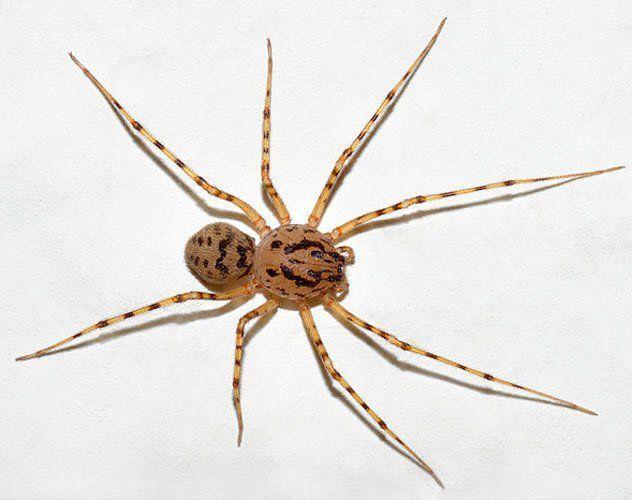 بحث حول العنكبوت