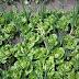 Ιωάννινα:Εκπαιδευτικός λαχανόκηπος στο 1 Λύκειο