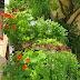 Mischkultur - Welche Gemüse- und Kräutersorten sich gut riechen können