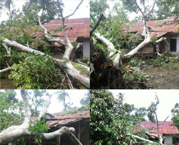 Pohon Mangga Tumbang, Rumah Warga Aceh Besar Roboh