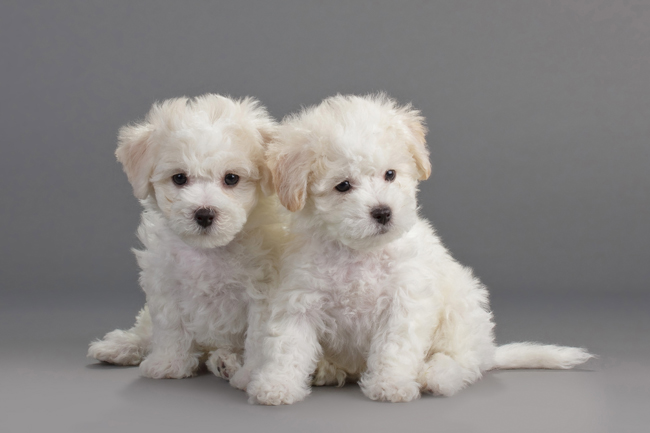 Kalendarium wystaw psów do końca roku 2013