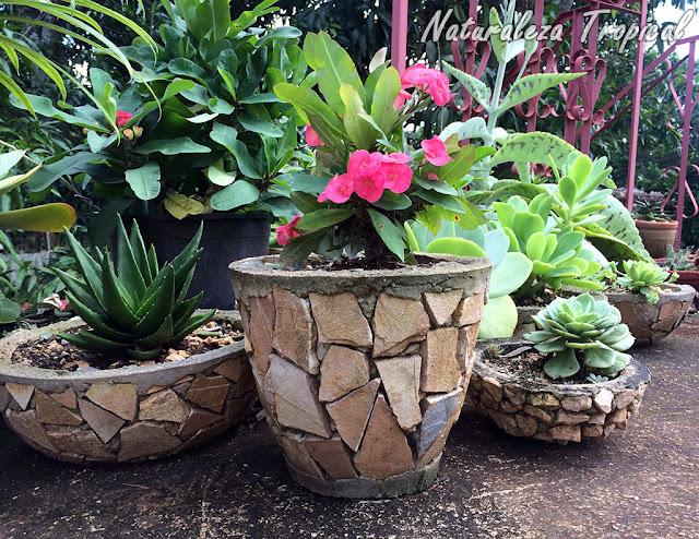 Macetas de concreto para el cultivo de plantas suculentas